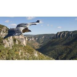 Rando 4x4 Nature Aveyron